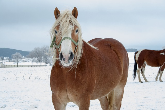 Pferd Winter